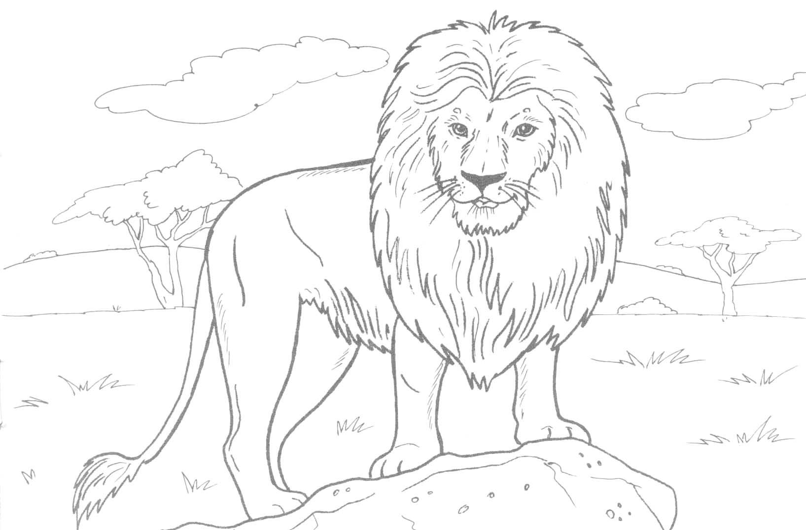 African_Lion_Coloring_Page_01