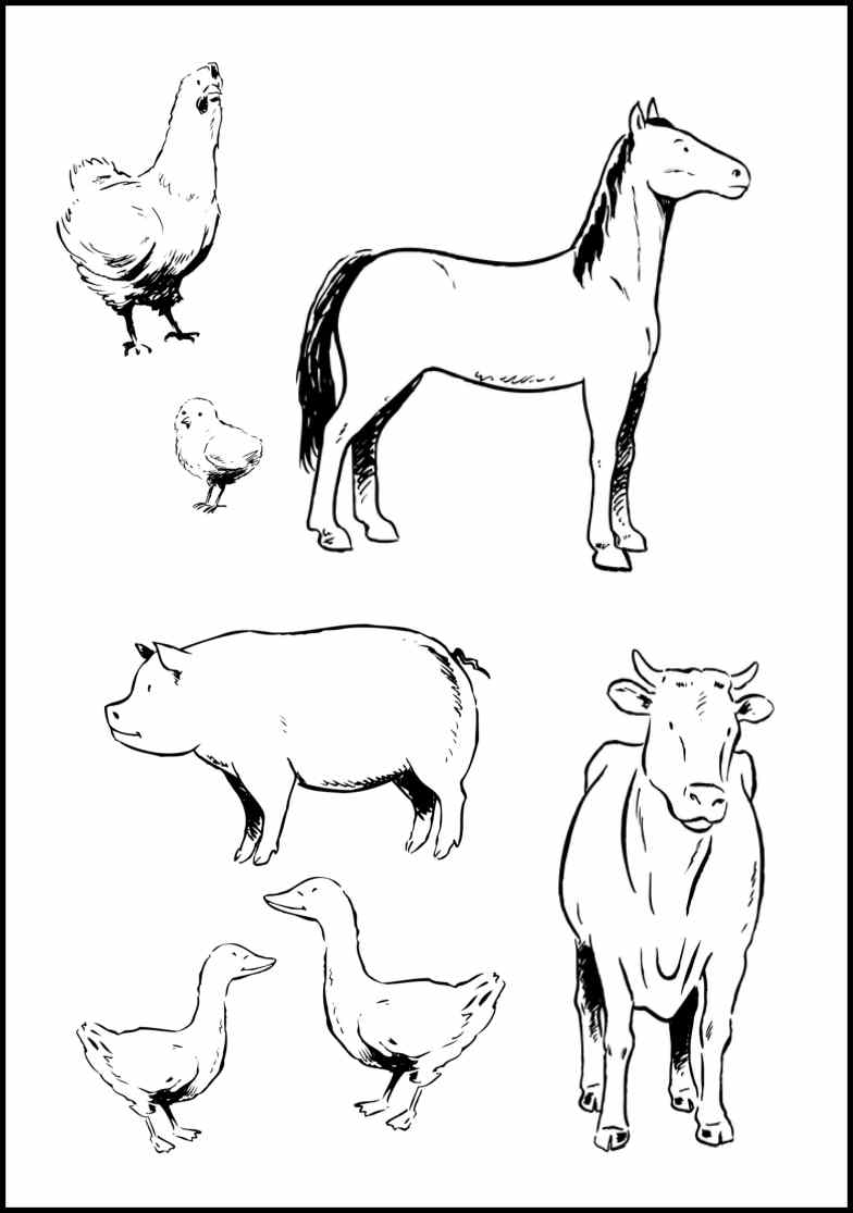 Baby farm animal coloring pages only coloring pages for Farm animal coloring pages