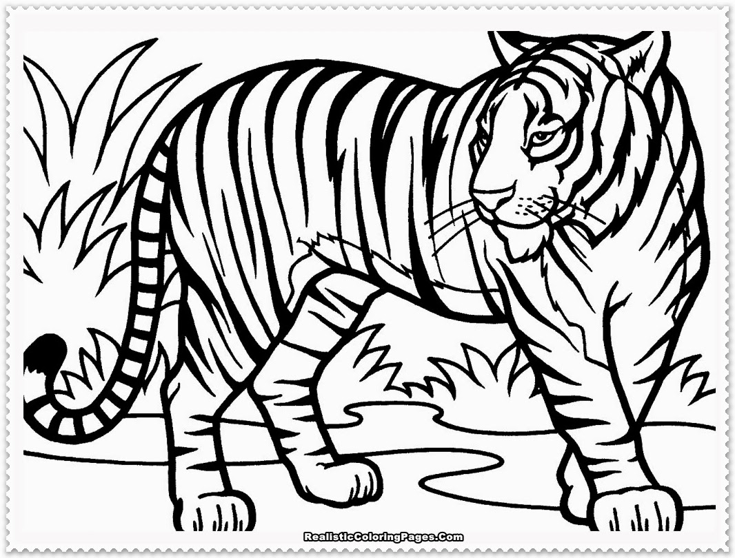 Tiger coloring page pinterest tiger coloring page for Tiger paw coloring page