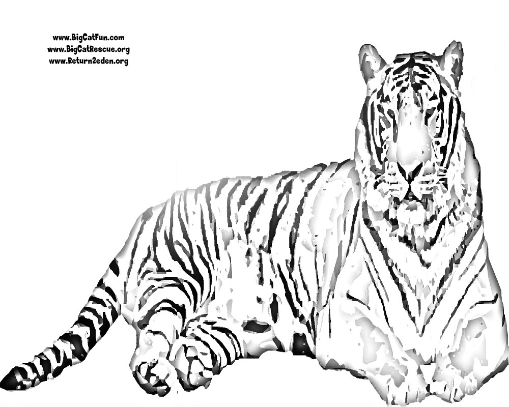 tiger coloring page Only Coloring