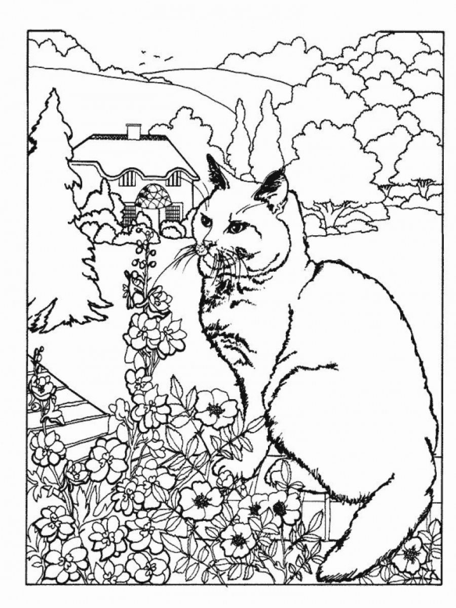 Intricate Cat Coloring Pages : Free intricate cat coloring pages