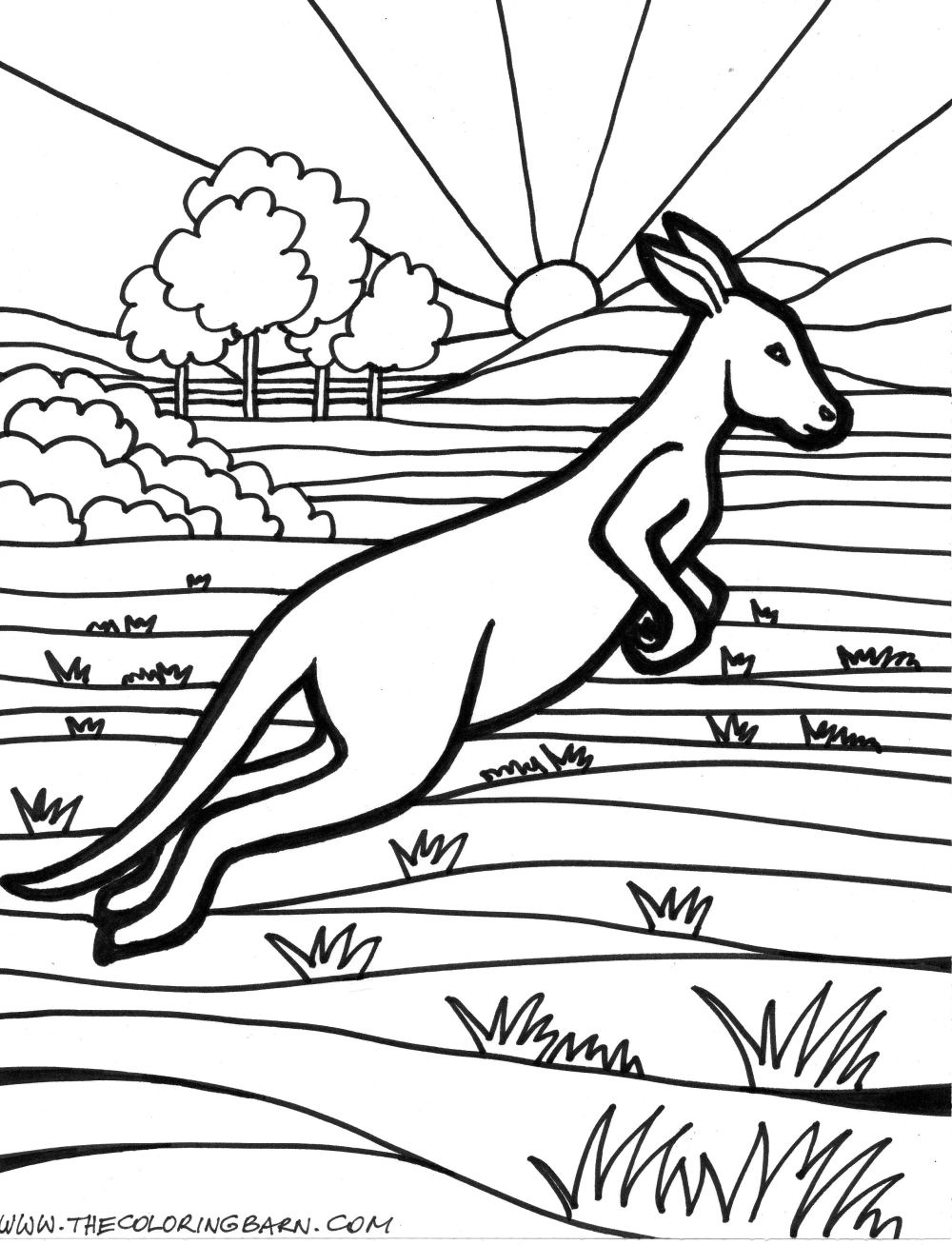 coloring pages kangaroo