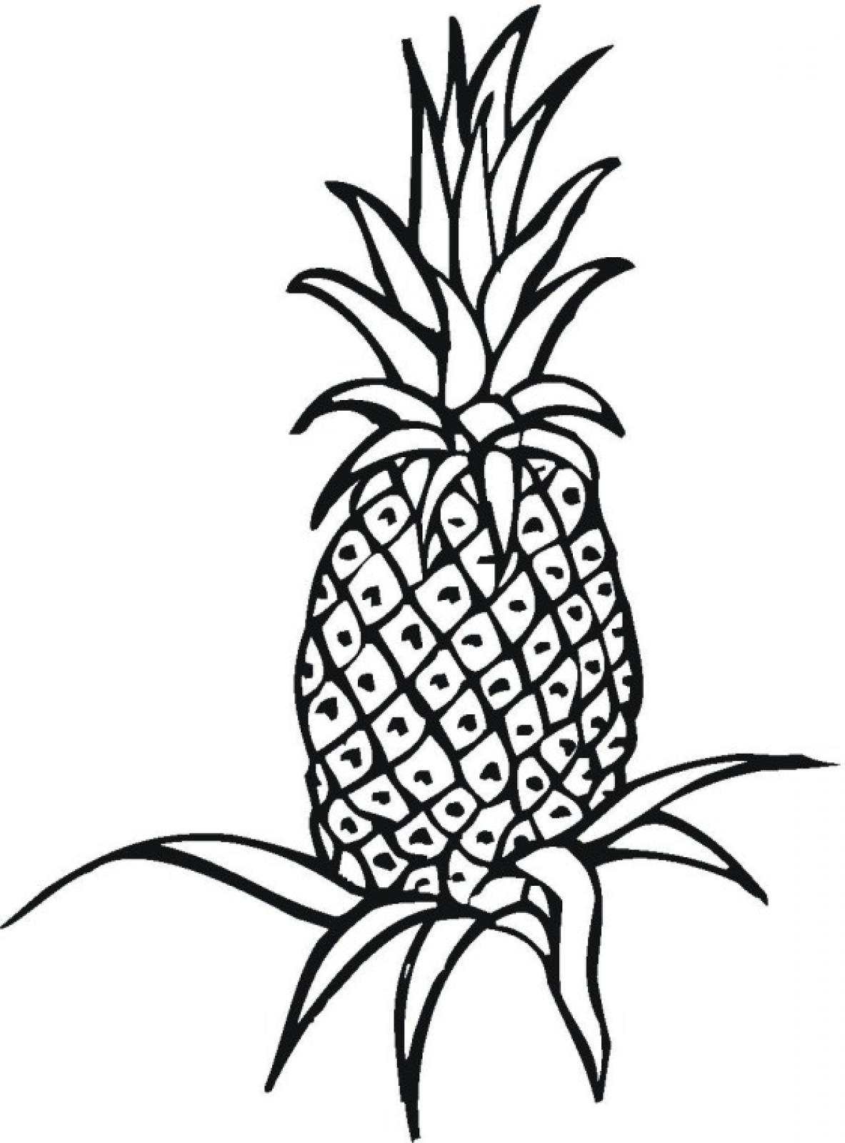 Pineapple Coloring Page Only Coloring Pages