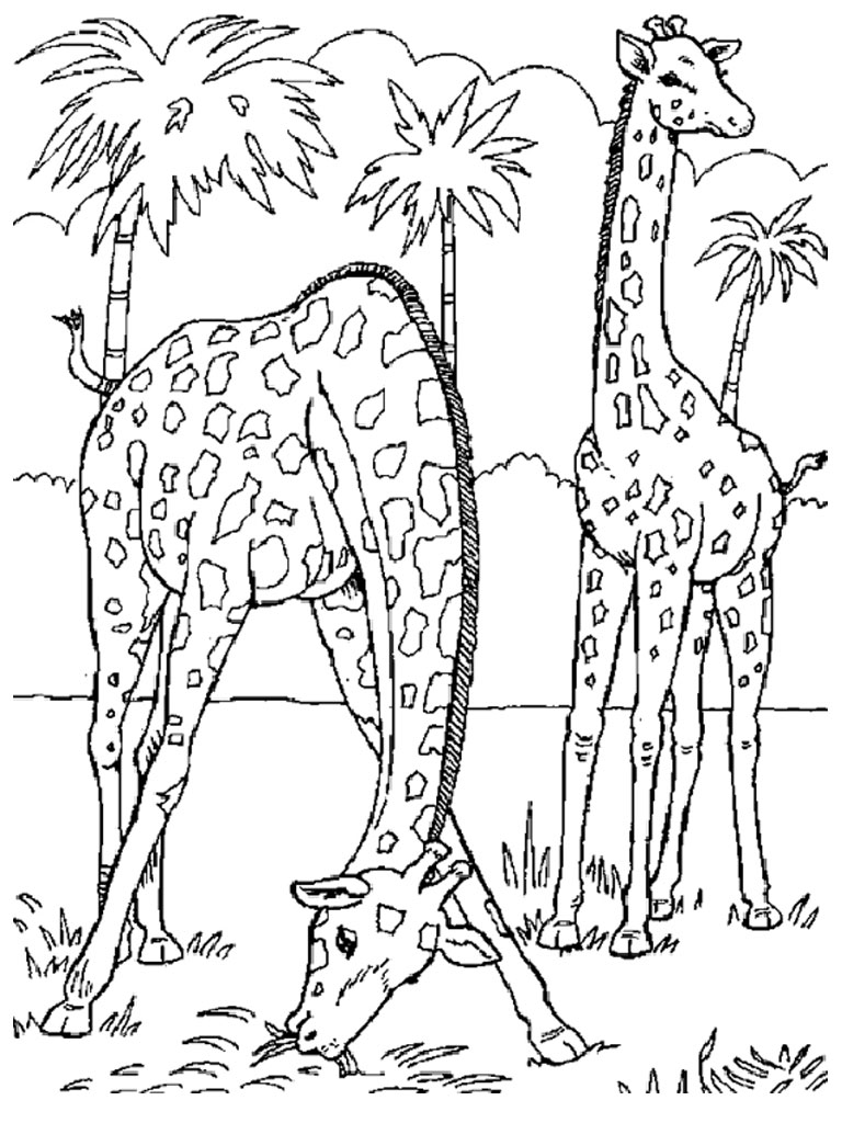 coloring pages for free animals - photo#18