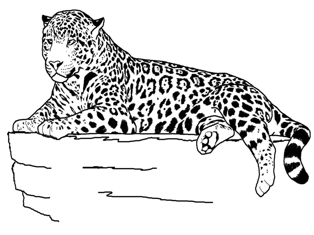Coloring Pages Animals Realistic Lion : Realistic animals coloring pages only