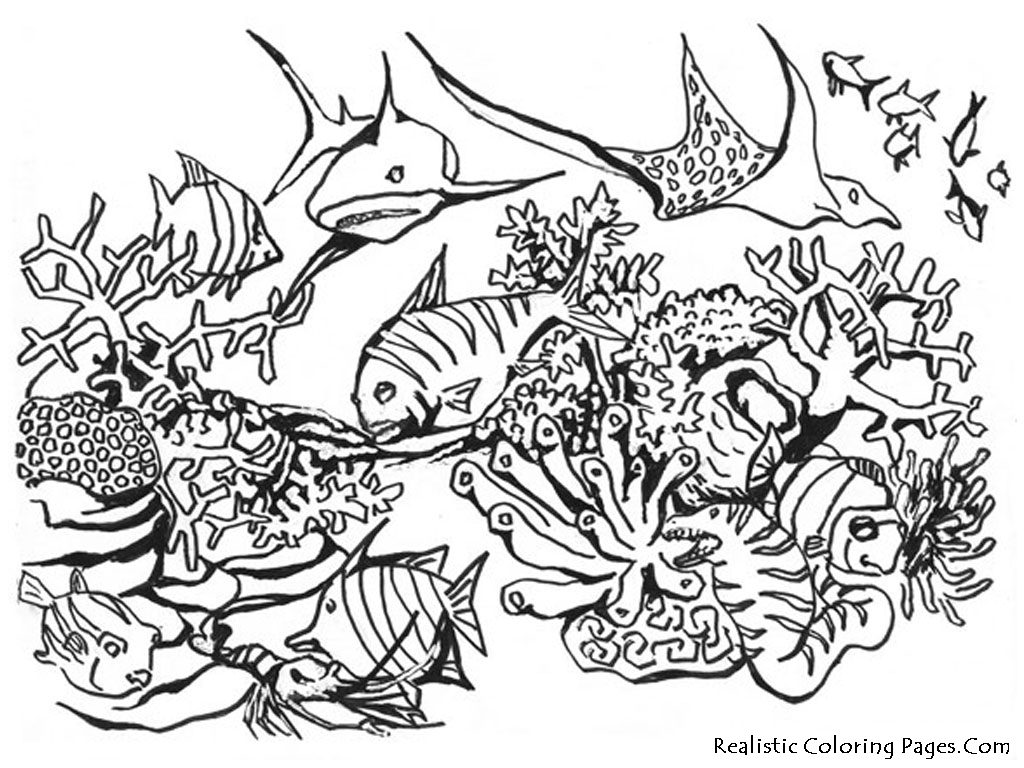 Coloring Pages Animals Realistic : Free coloring pages of sea creatures under water