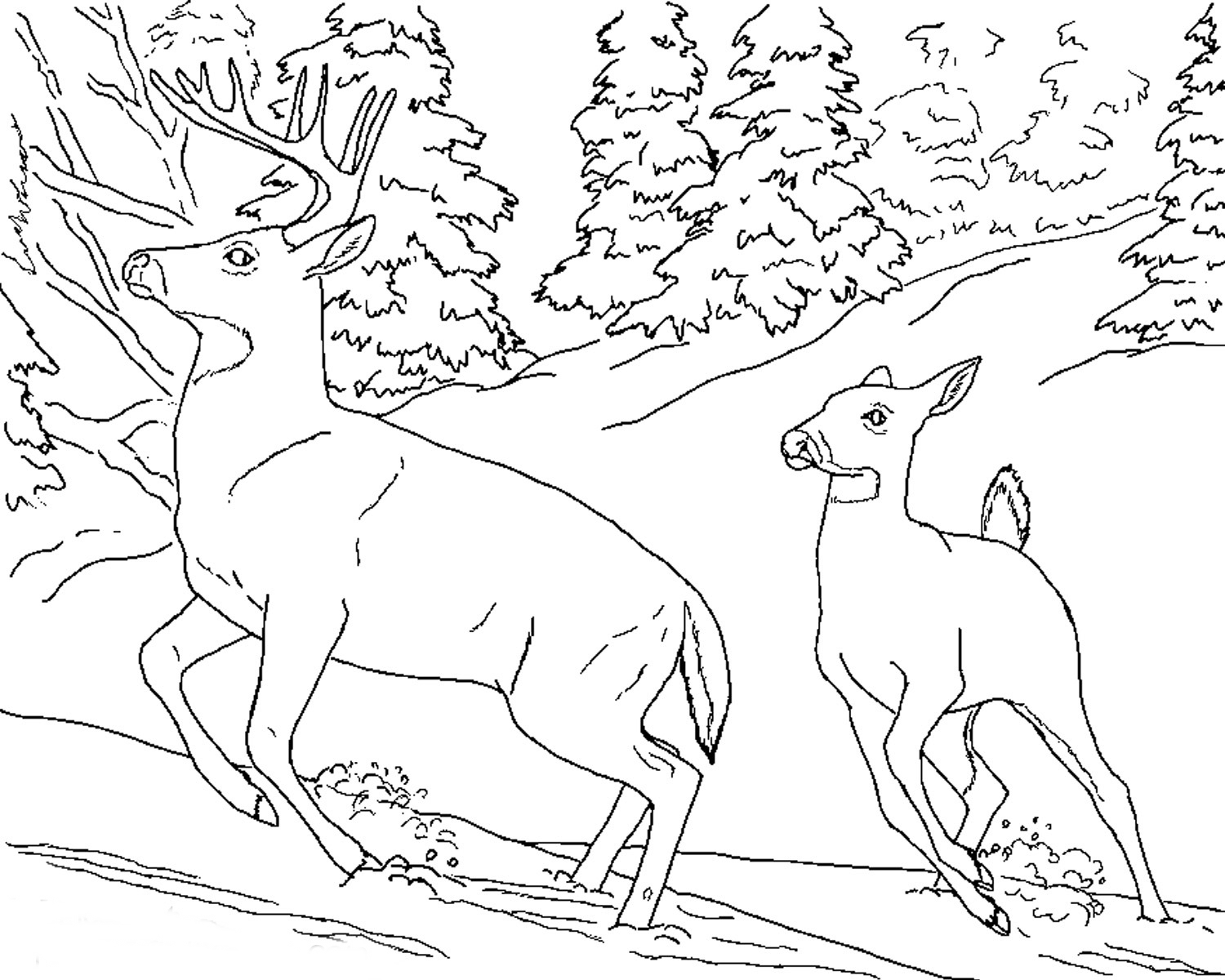color pages of animals | Coloring Page, Books and etc