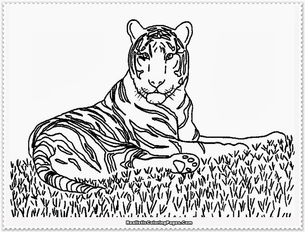 Realistic animals coloring pages only coloring pages for Animals coloring page