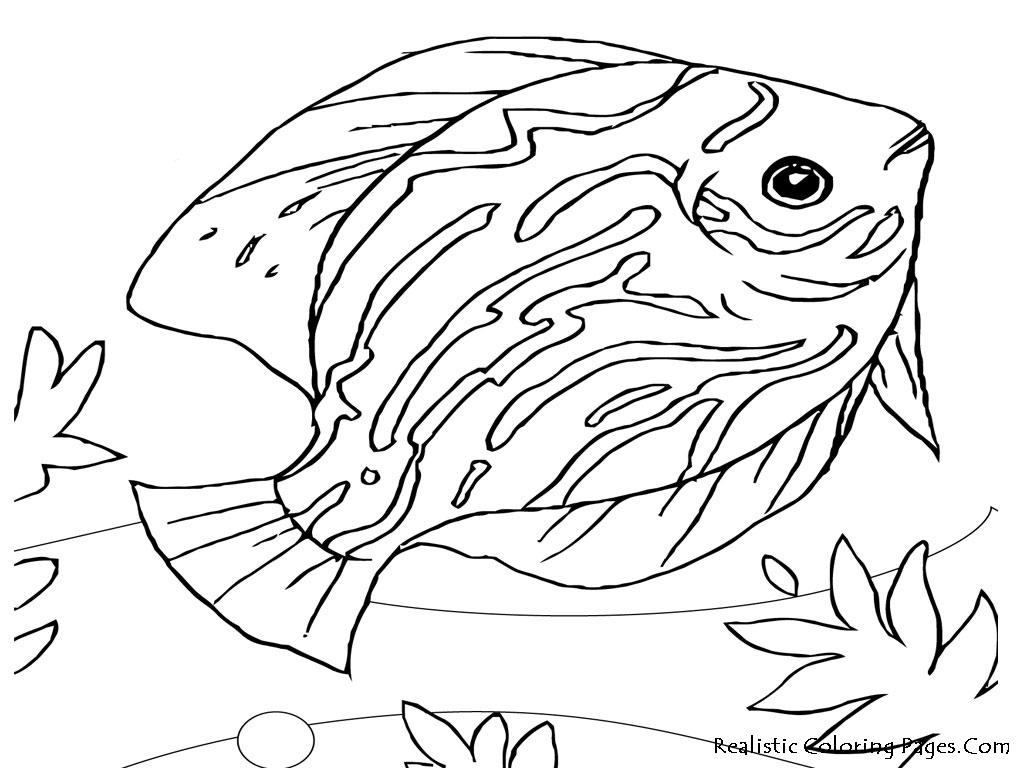 Coloring Pages Animals Realistic : Realistic animals coloring pages only