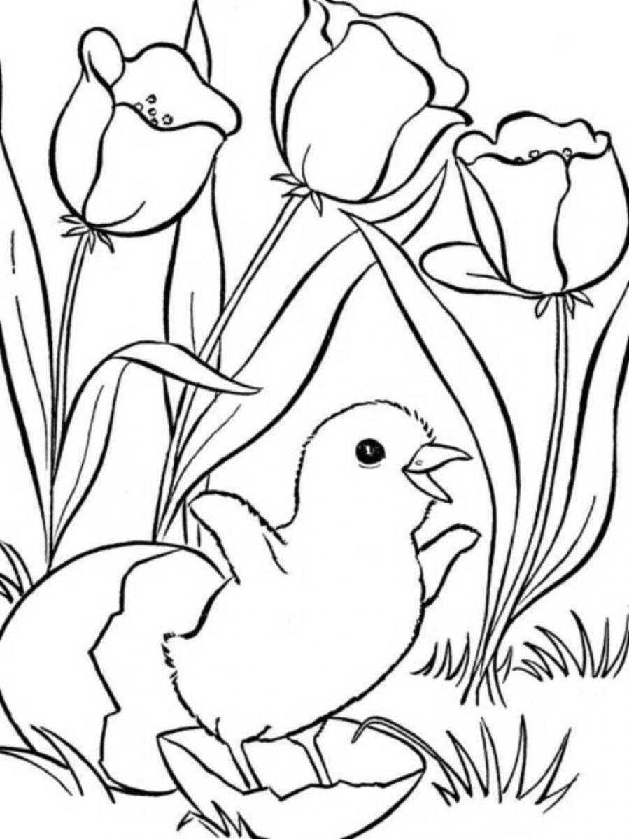 Zany image with free printable spring coloring pages for adults