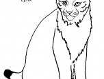 lynx coloring pages for kids - photo#46