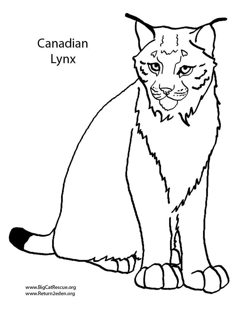 lynx coloring pages 01