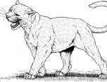puma and cougar coloring pages