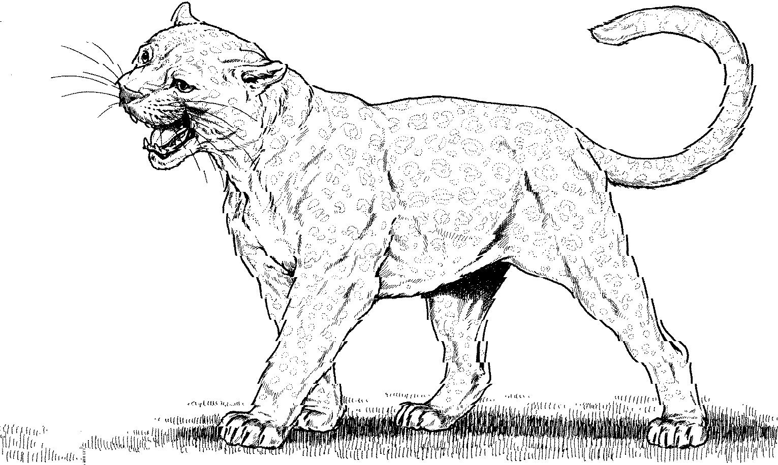 coloring pages mountain lion - photo #22