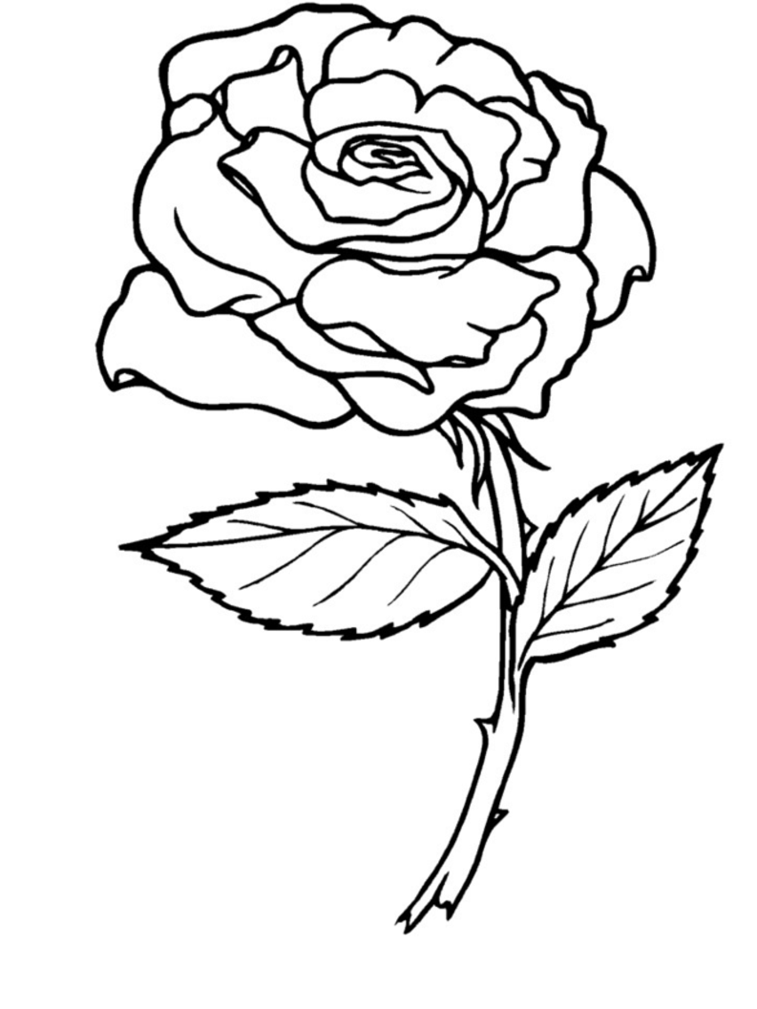 rose coloring page only coloring pages