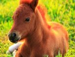 cute baby horse coloring pages