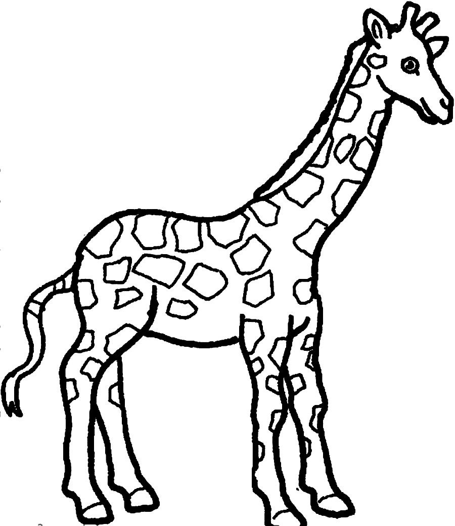 Giraffe coloring page only coloring pages for Giraffe color page