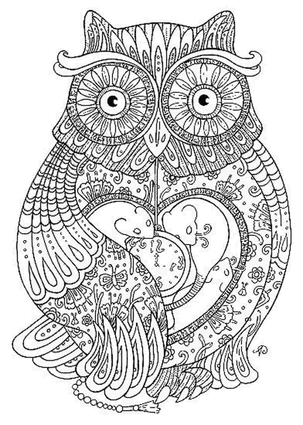 owl coloring pages for adults 01