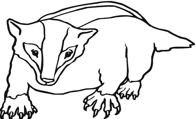 Badger Coloring Page 01