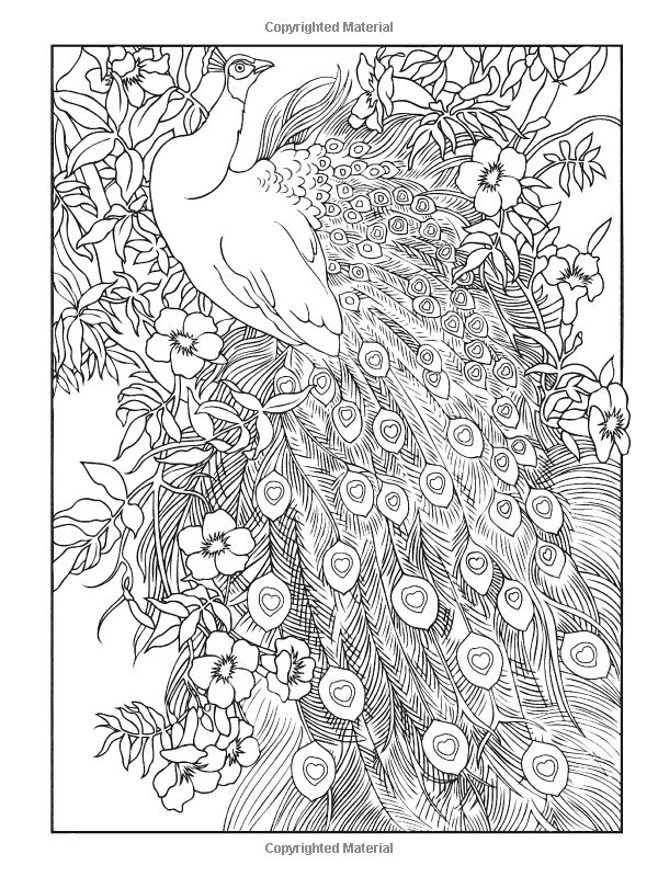 Creative Book Page Design : Creative haven peacock designs coloring book pinterest