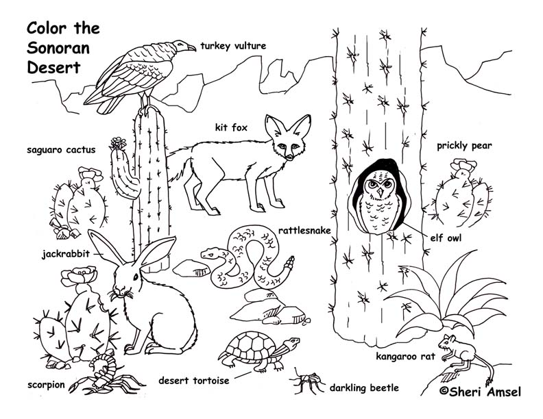 desert animals coloring pages 01
