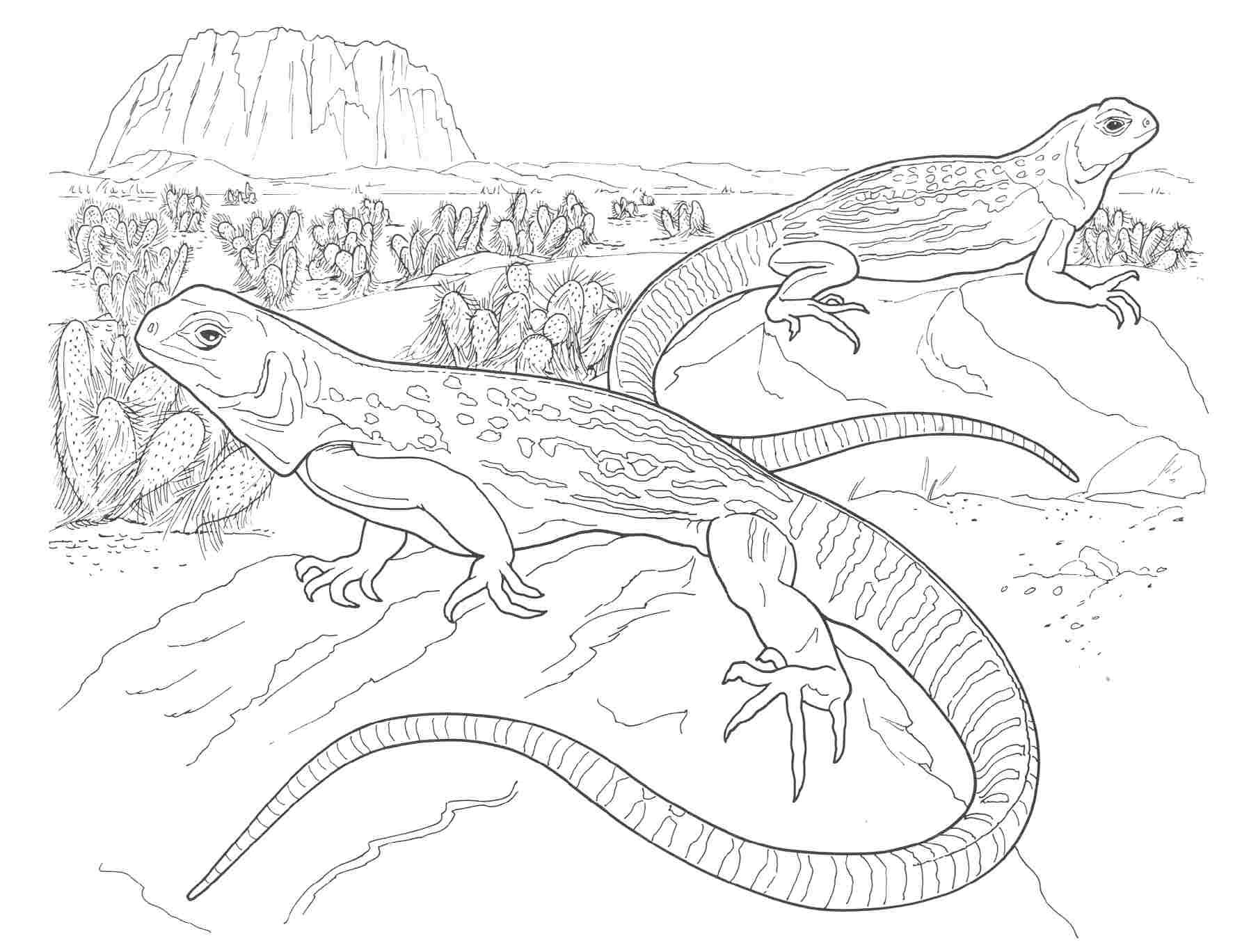 Iguana free printable adult coloring pages 01