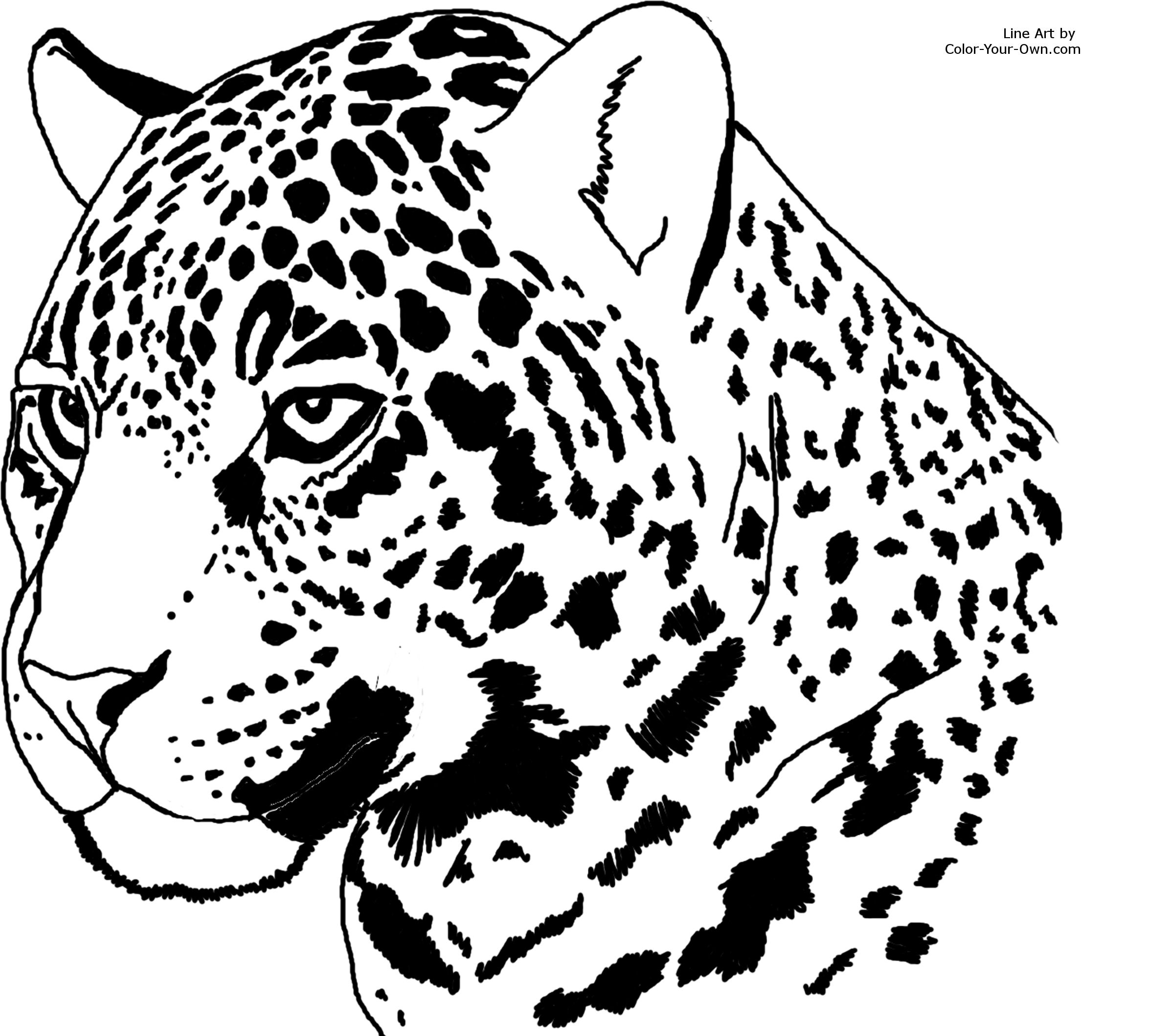jaguar coloring pages Only Coloring