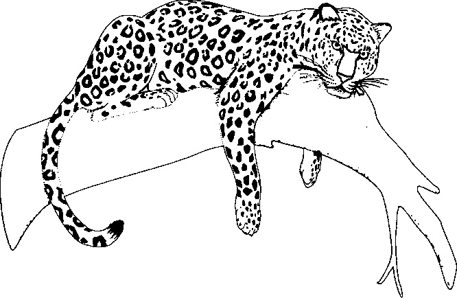 coloring pages jaguars - photo#10