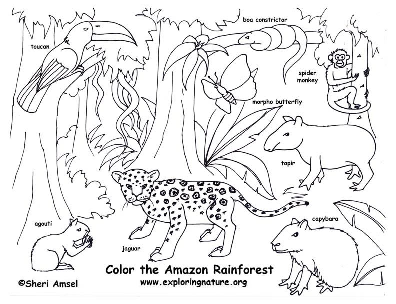 rainforest animals coloring pages