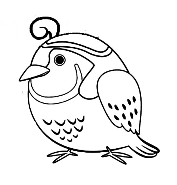 Line Drawing Quail : Quail coloring page