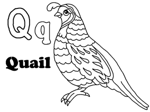 Quails coloring pages  Free Coloring Pages