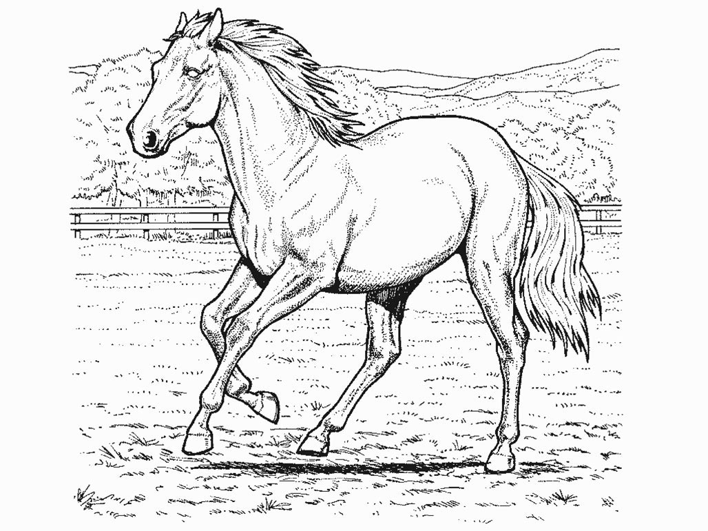 realistic horse coloring pages 01