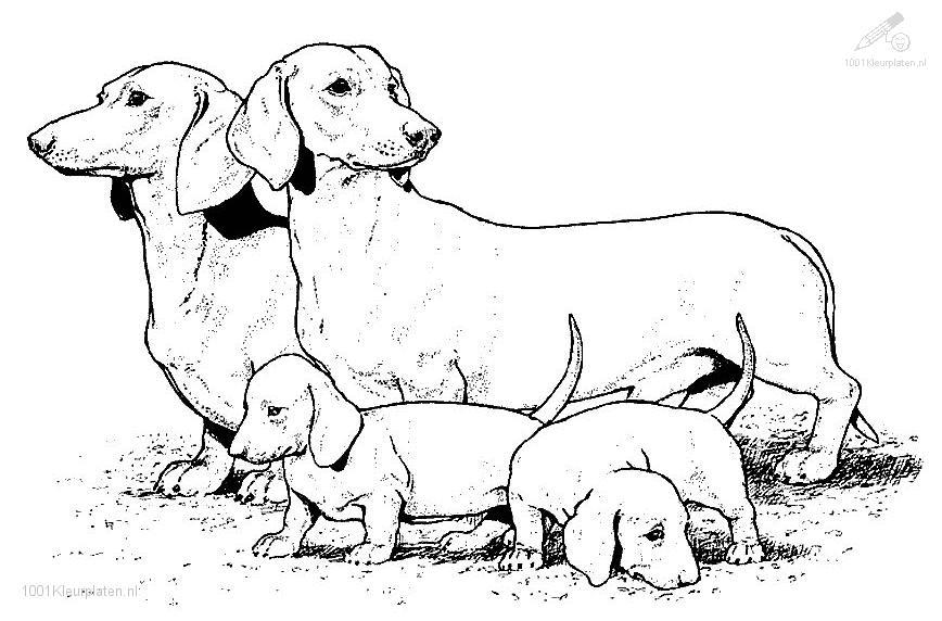 realistic puppy coloring pages 01