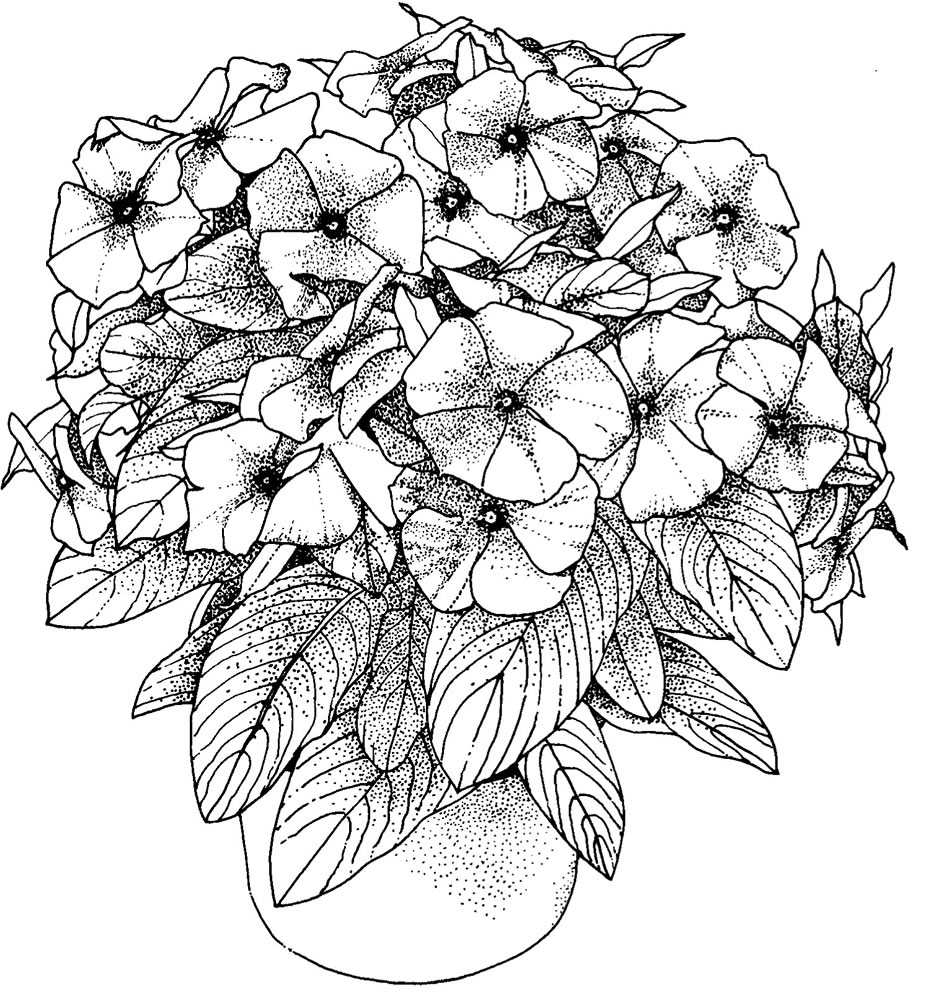 flowers coloring pictures for adults