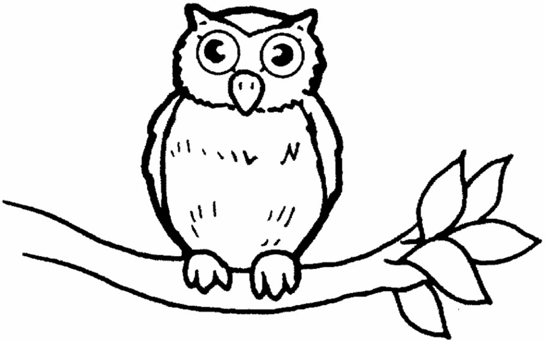 owl coloring pages colored pinterest
