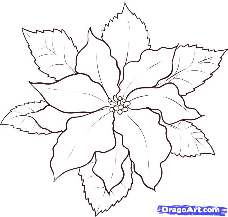 poinsettia coloring pictures