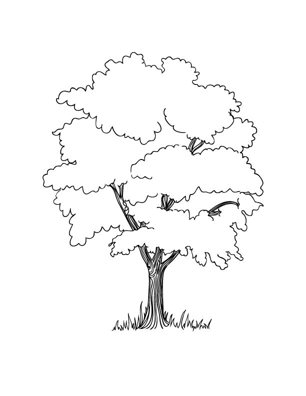 Tree Coloring Pages With Roots 01