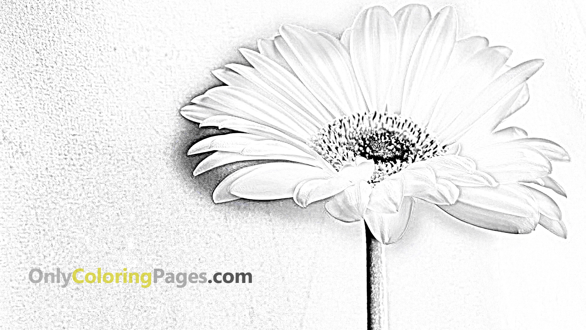 Coloring_Page_Of_Flower