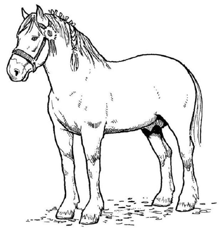 horse coloring page 06