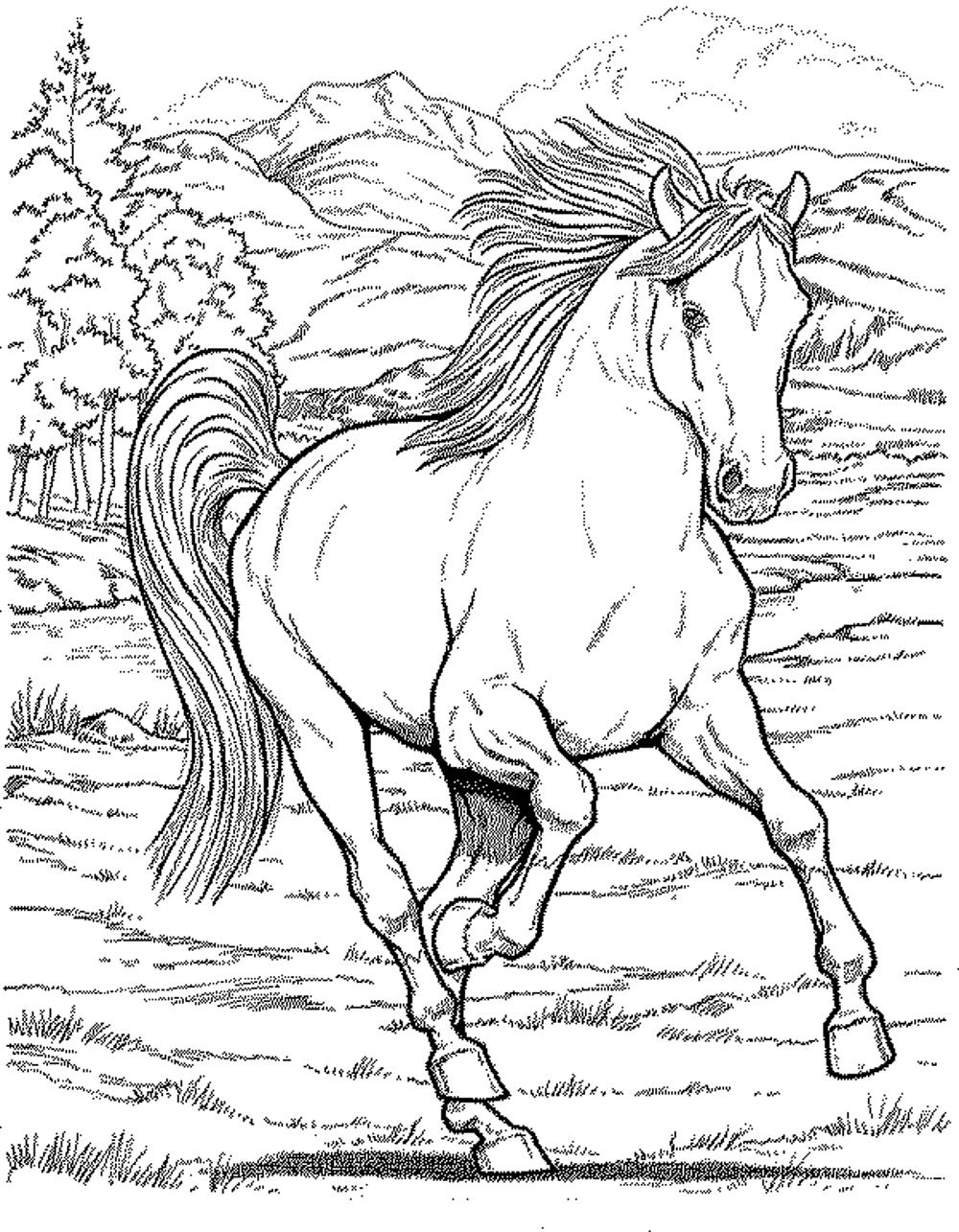 Coloring pages horses - Printable Coloring Pages Of A Horse 2