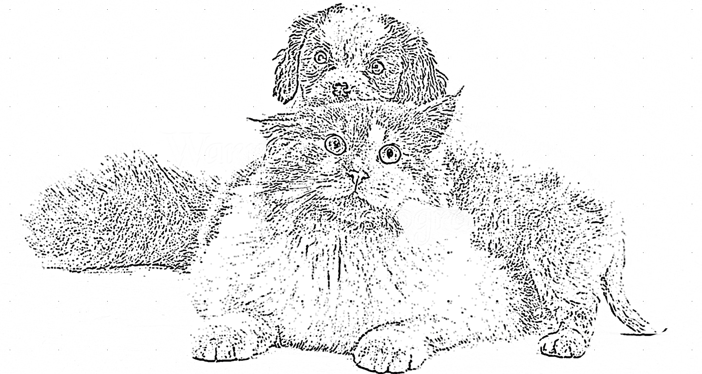 Cat and Dog Puppy Coloring Page