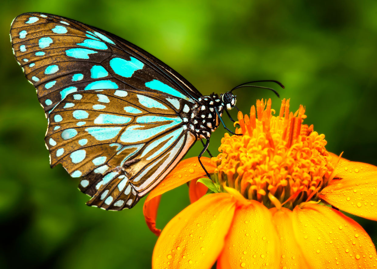 Butterfly Online Coloring Page For Teenagers