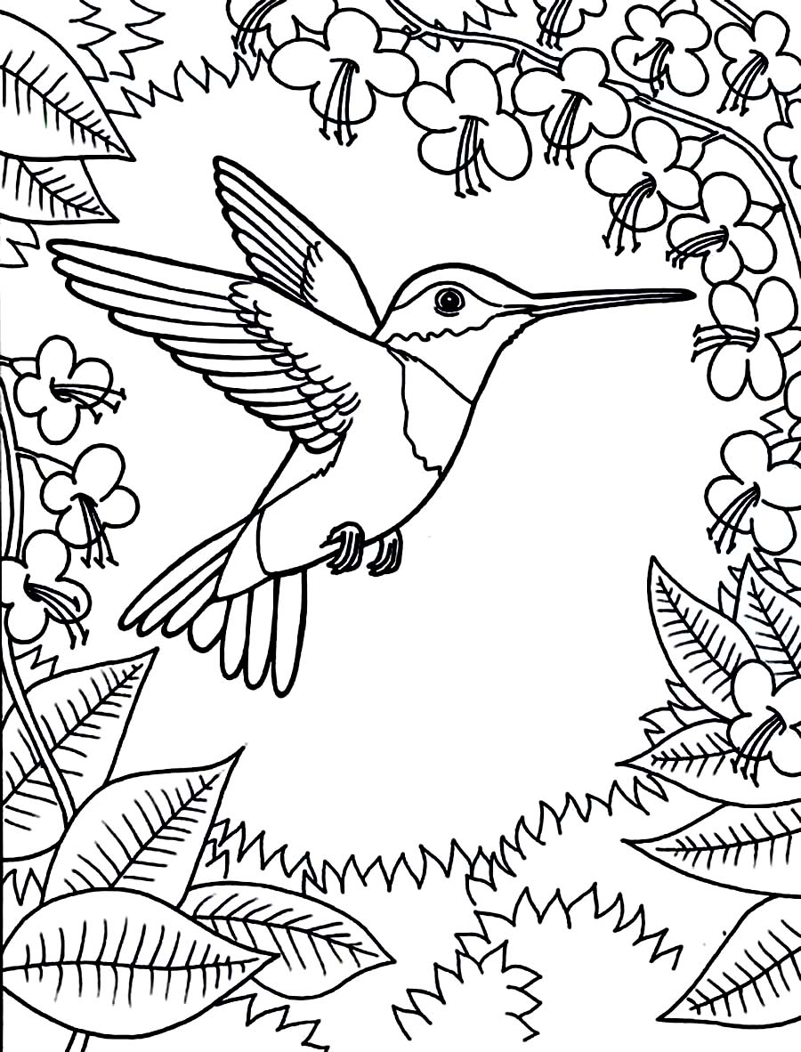 Hummingbird Coloring Pages 01