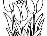 Tulip Coloring Page   Only Coloring Pages
