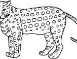 Realistic Jaguar Animal Coloring Pages Only Coloring Pages