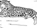 Realistic Jaguar Animal Coloring Pages