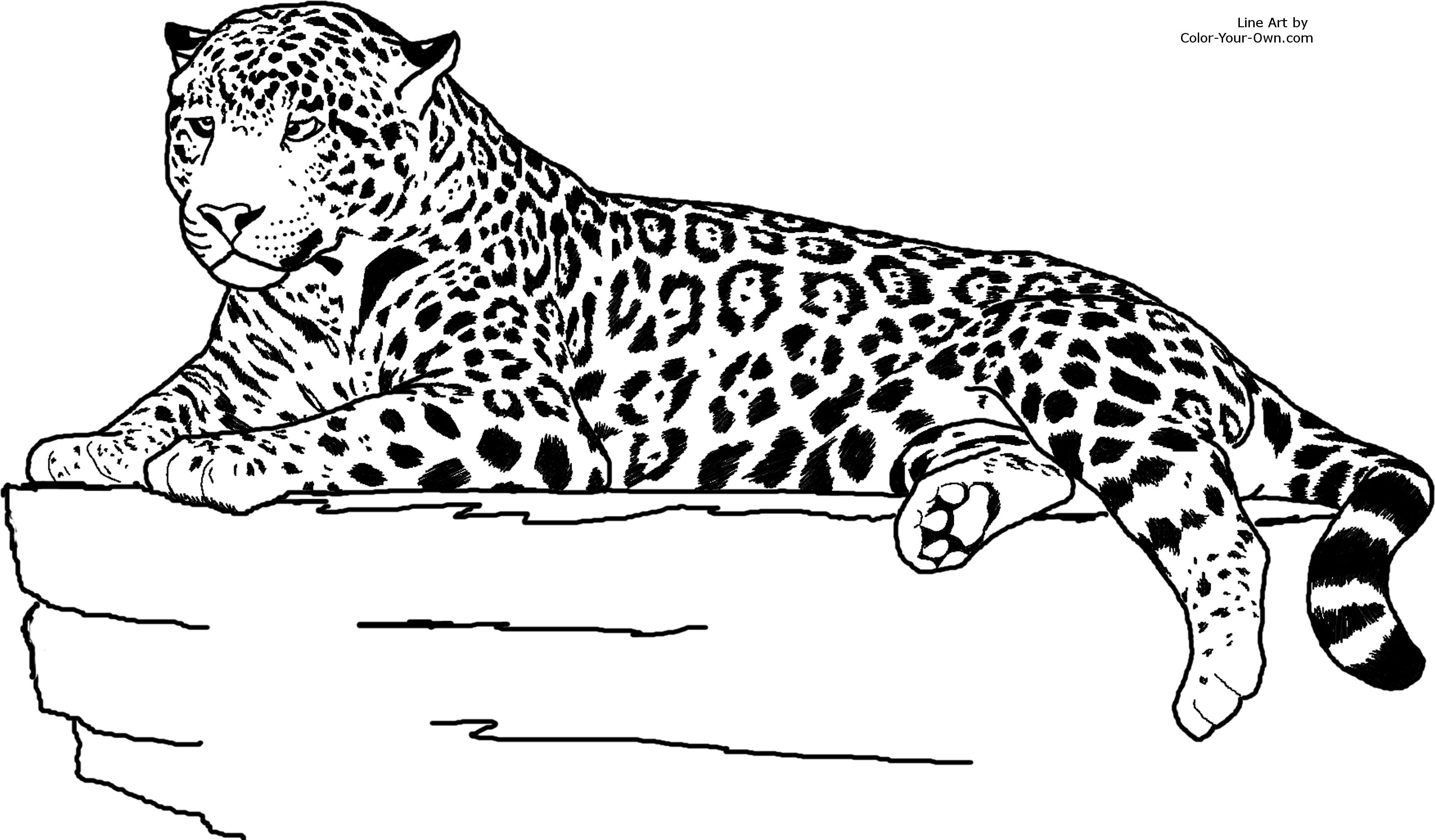 coloring pages baby jaguar - photo#34