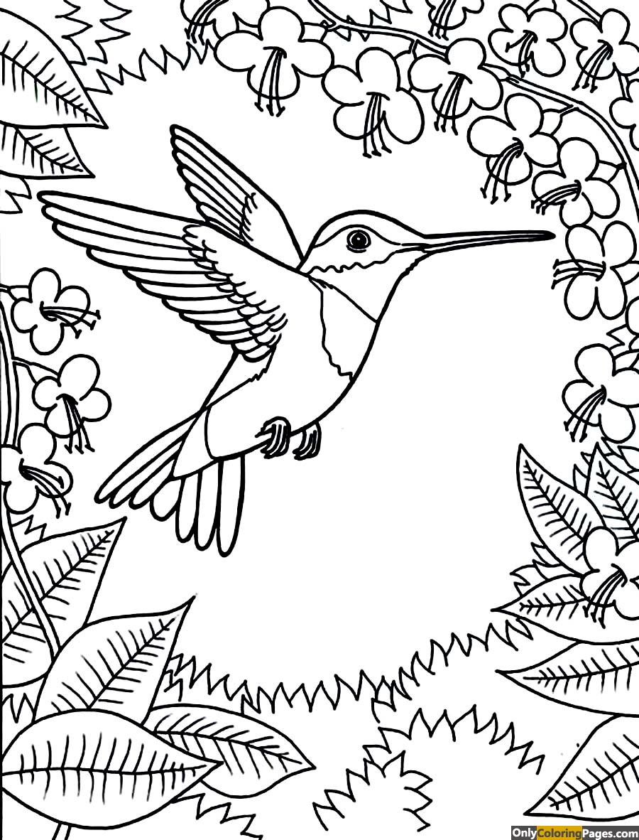 hummingbird-coloring-pages