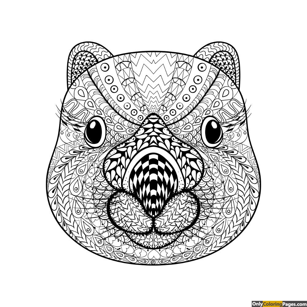 Wombat Face Adult Coloring Page