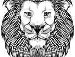 lion face hard coloring page for adults